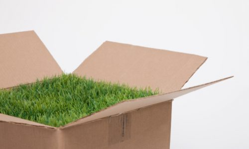 Studio shot of cardboard box with grass